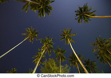 Beautiful tropical night sky with coconut palm trees and stars, Thailand