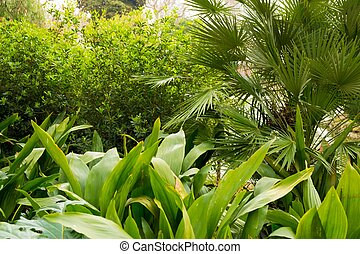Beautiful tropical plants on sunny day
