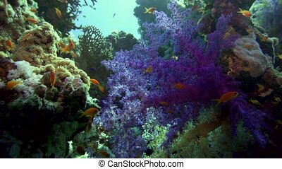 Beautiful tropical soft coral reef. red sea - Beautiful...