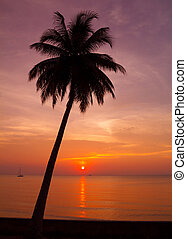 Beautiful tropical sunset with palm tree silhoette