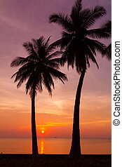 Beautiful tropical sunset with palm trees silhoette