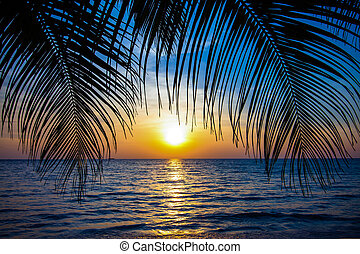 Beautiful tropical sunset with palm trees. Tropical beach. palms on the ocean beach