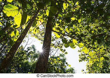 Beautiful Tropical trees in green forest