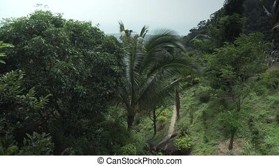 Beautiful tropical vegetation of Paradise Park Farm Samui...