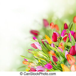 Beautiful tulips bouquet with free space for text