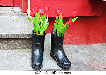 Beautiful tulips flowers in boots