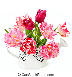 Beautiful tulips in a decorative watering can isolated on a white background.