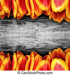 Beautiful tulips on a board. black and white wooden background.