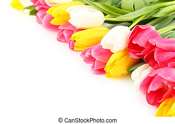 Beautiful tulips on white background