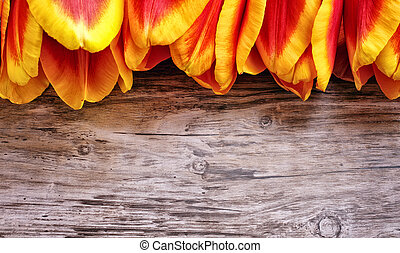 Beautiful tulips on wooden board