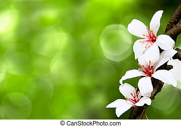 beautiful tung flowers for adv or others purpose use