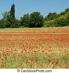 beautiful tuscan fields