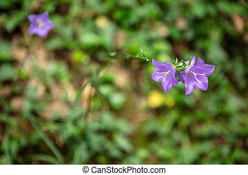 Beautiful Twin purple flowers