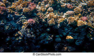 Beautiful underwater iamge of anemones and corals growing on the tropical reef. Lots of fishes swimming in the Red sea