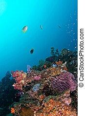 beautiful underwater view - beautiful and colorful ...