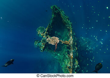 Beautiful underwater view with fish at shipwreck