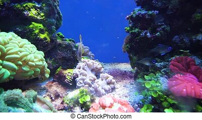 beautiful underwater world - beautiful corals and fishes...