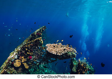 Beautiful underwater world with corals and tropical fish at USS Liberty Wreck