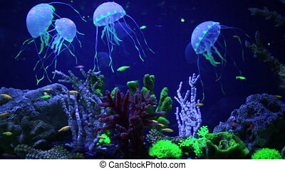 Beautiful underwater world with tropical fish