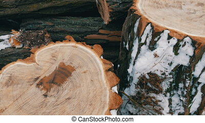 Beautiful unusual cut tree trunks in the shape of a heart against other trunks lie outside in the winter. Firewood for winter. St. Valentine's Day