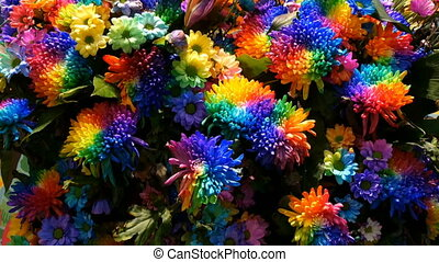 Beautiful unusual interesting multi-colored rainbow peonies,...
