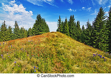 Beautiful valley in the forest in the mountains of the Carpathians.