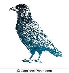 Beautiful vector raven