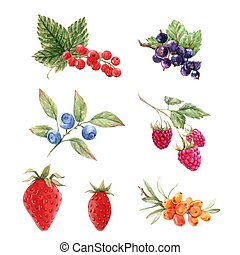 Beautiful vector set with watercolor berry paintings. Stock illustration.