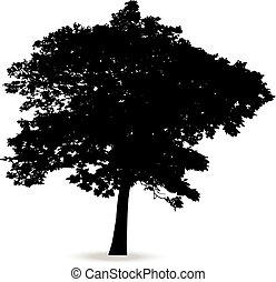 Beautiful vector tree silhouette