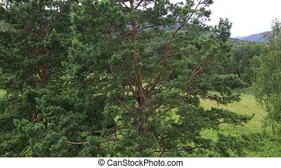 Beautiful vegetation on hillside - Beautiful vegetation on...