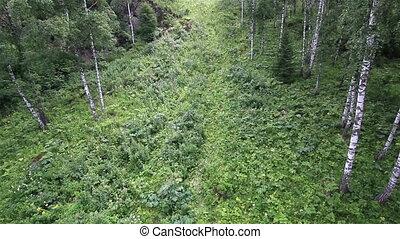Beautiful vegetation on the hillside of Mount Shallow...