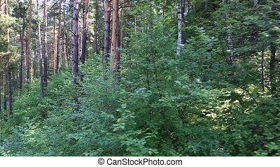 Beautiful vegetation on the hillside of Mount Tserkovka in...
