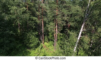 Beautiful vegetation on the hillside of Mount Tserkovka in...