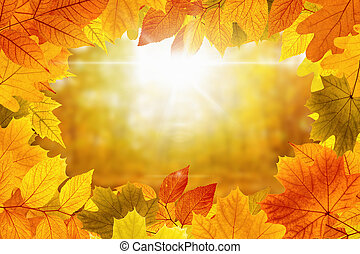 Beautiful vibrant fall background