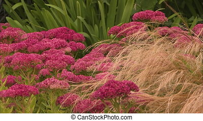 Beautiful vibrant flowers on a garden