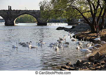 Charles bridge, Prague, Czech Republic - Beautiful view...
