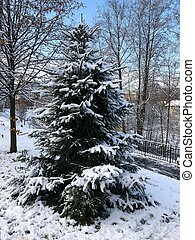 Beautiful view Christmas tree in the snow