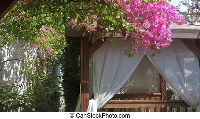 Beautiful view of a flowering tree and a tent with white curtains on the beach, garden in the hotel.
