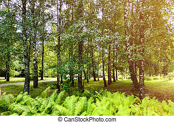 Beautiful view of a green park in spring or summer, blue sky with white clouds.