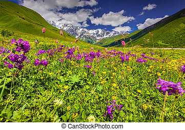 Beautiful view of alpine meadows in the Caucasus mountains. ...
