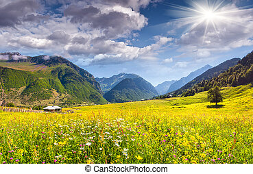Beautiful view of alpine meadows in the village Zhabeshi. ...