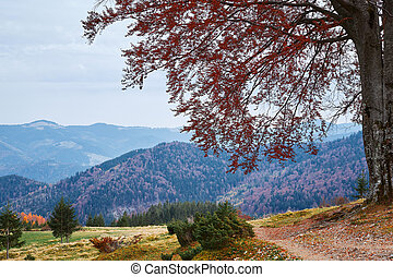 beautiful view of an autumn mountain landscape with a mountain trail and big branchy tree