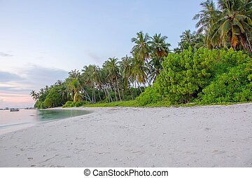 Beautiful view of coast line of an island in Indian Ocean, Maldives. White sand beach and green trees on blue sky background.