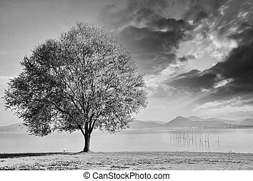 Beautiful view of isolated tree on dramatic background sky