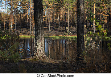 tarn in forest after devastating fire