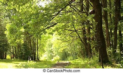 Beautiful view of the oak grove in summer HD 1920x1080 -...