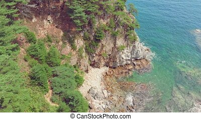Seaside landscape with coniferous forest - Beautiful view of...