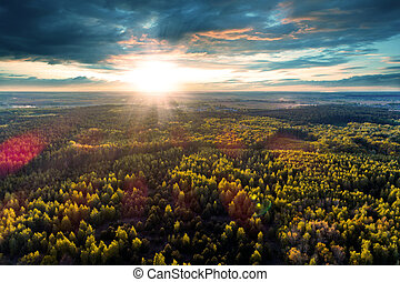 Beautiful view of the tops of trees at sunset.
