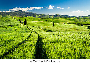 Beautiful view of the valley in Tuscany