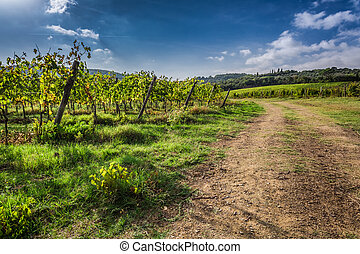 Beautiful view of the vineyards in Tuscany, Italy